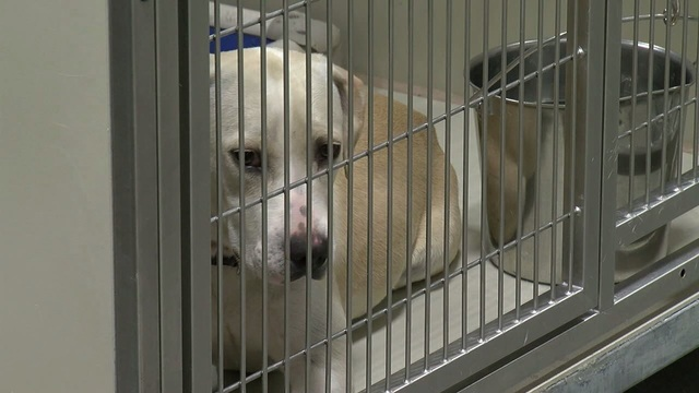 $11, 11 hours: Just One Day pet adoption event returns